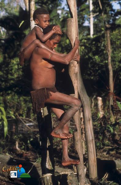 papous4bigkor.jpg
