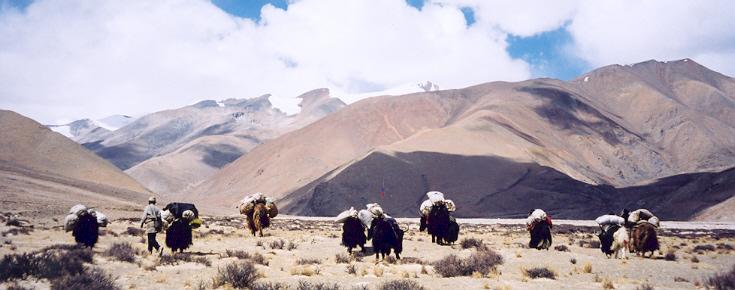 tibetcaravane.jpg