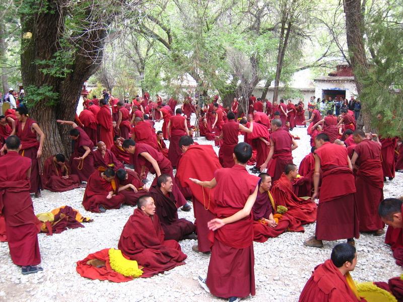 tibetdbat.jpg